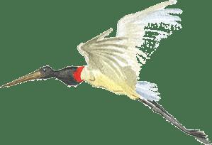 about us bird
