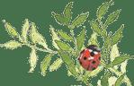 lady bug button image