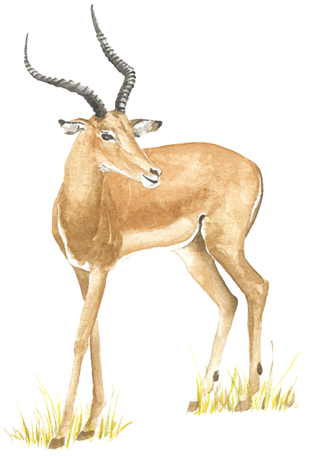 about deer